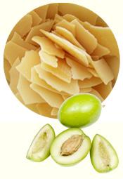 plante-emulsifiant_olive-protection[1]