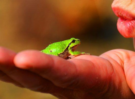frog-prince-334970_960_720[1]