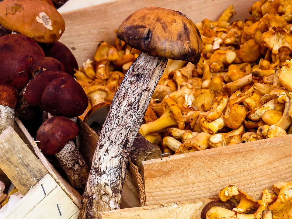 mushrooms-1603666_960_7201
